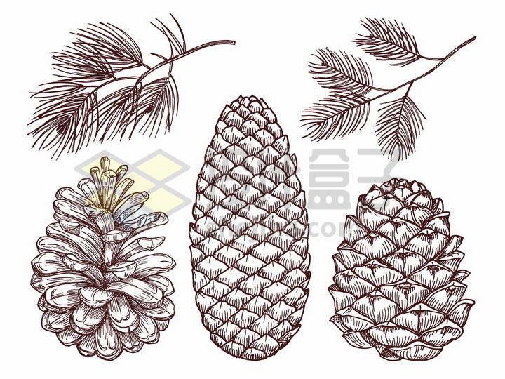 松针松树的叶子和松果手绘插画png图片免抠矢量素材