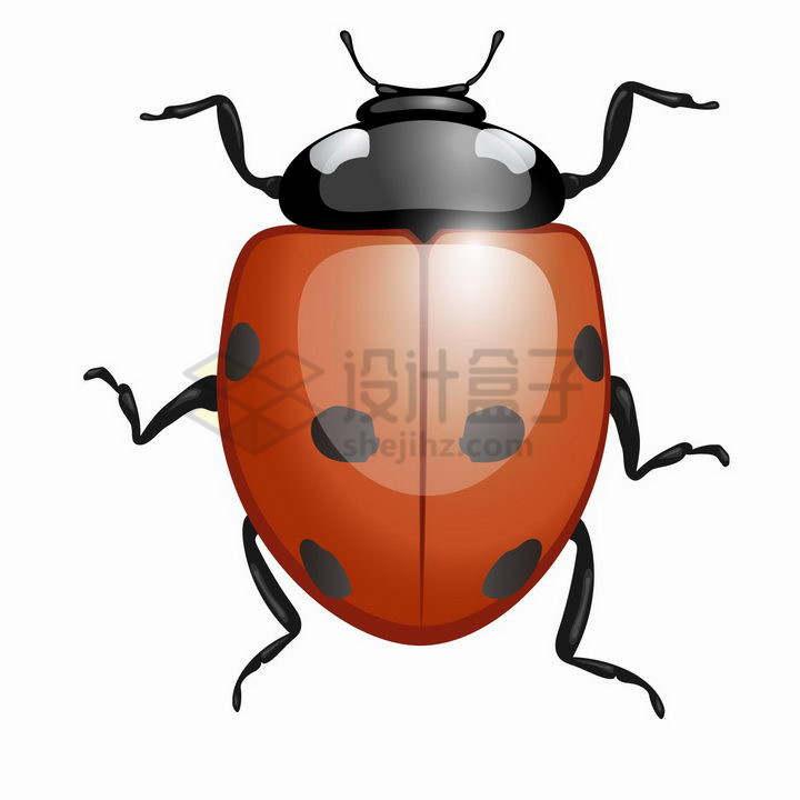 水晶风格七星瓢虫甲壳虫小昆虫png图片免抠矢量素材