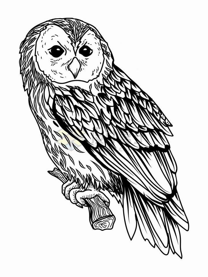 站在树枝上的猫头鹰黑色线条插画png图片免抠矢量素材