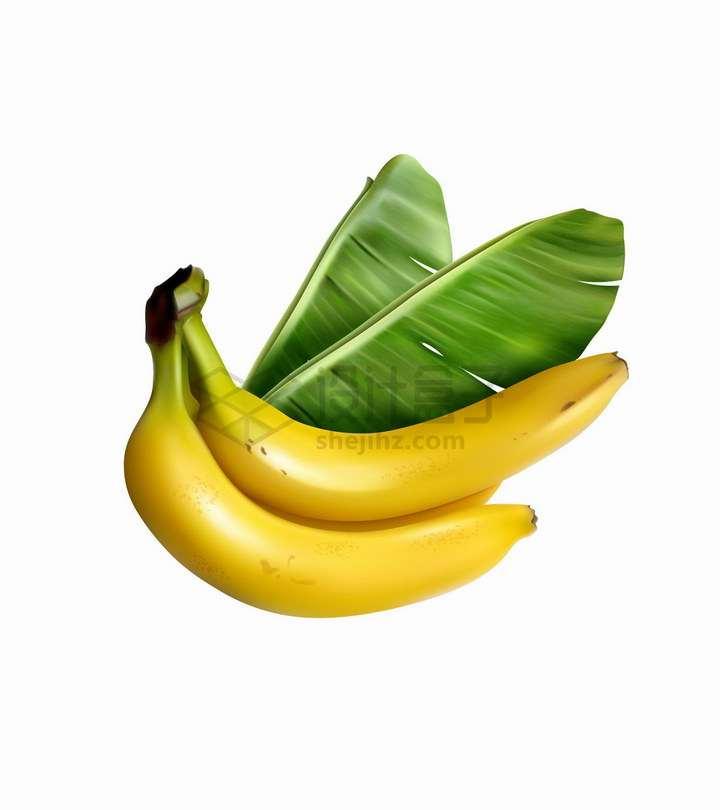 新鲜香蕉和香蕉叶美味水果png图片免抠矢量素材