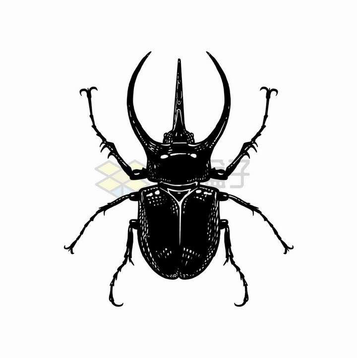 三个角的甲虫昆虫黑白插画png图片免抠矢量素材
