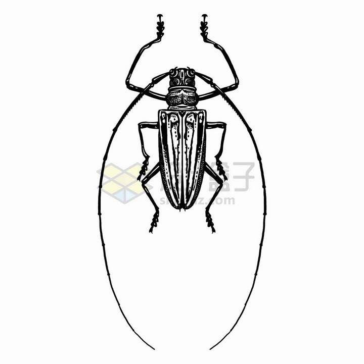 长角甲虫昆虫黑白插画png图片免抠矢量素材