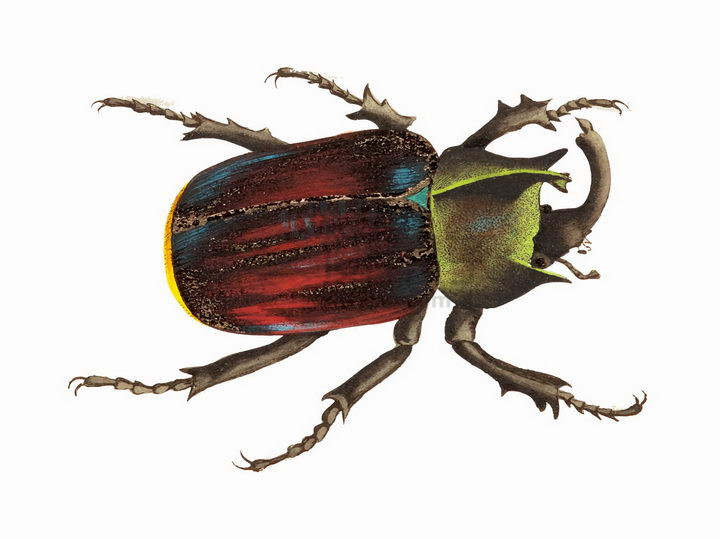 一只犀牛甲虫甲壳虫昆虫png图片免抠矢量素材