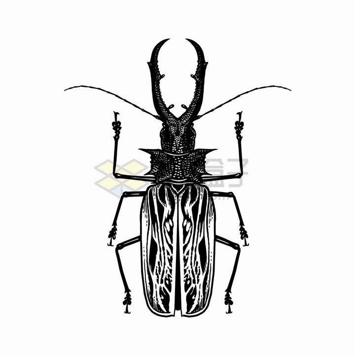 锹甲鹿甲虫昆虫黑白插画png图片免抠矢量素材
