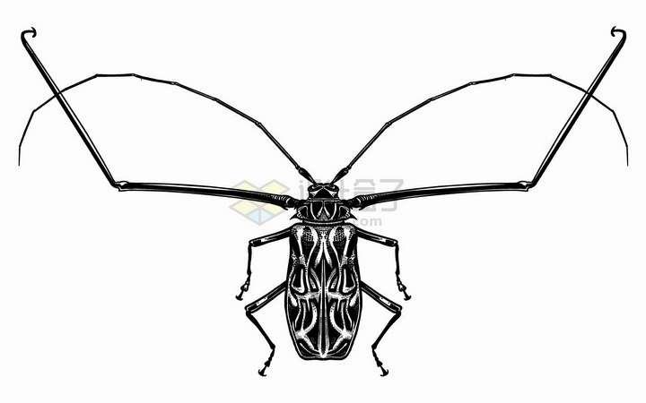 前肢和触须很长的甲虫昆虫黑白插画png图片免抠矢量素材