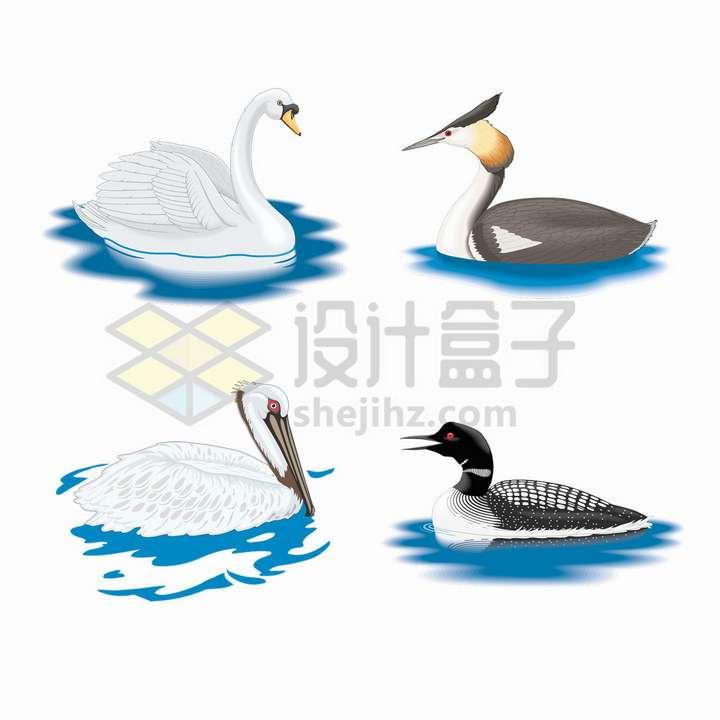 4款水面上的天鹅等水禽鸟类png图片免抠矢量素材