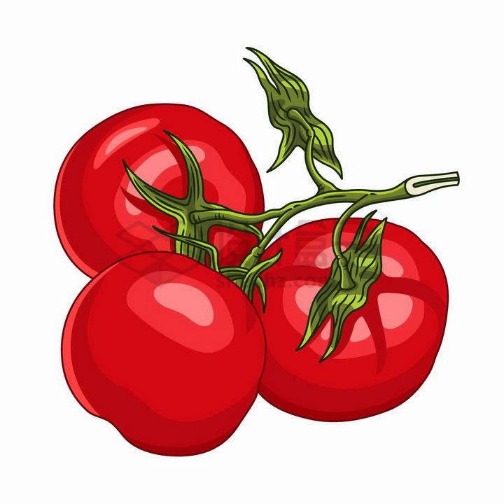 手绘风格树枝上的三颗西红柿美味番茄png图片免抠矢量素材