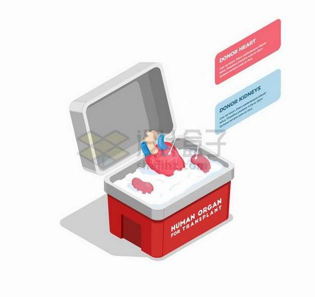 人体器官组织移植和运输冷藏箱png图片免抠矢量素材