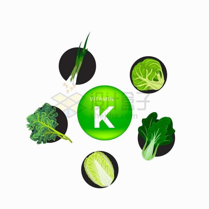 香葱包菜青菜菠菜白菜等富含维生素K的蔬菜png图片免抠矢量素材