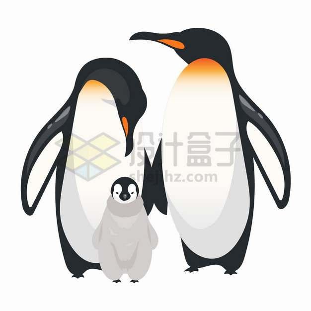 帝企鹅一家三口南极野生动物png图片素材