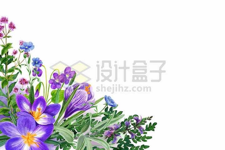 紫色桔梗野花鲜花花朵装饰彩绘插画png图片免抠矢量素材
