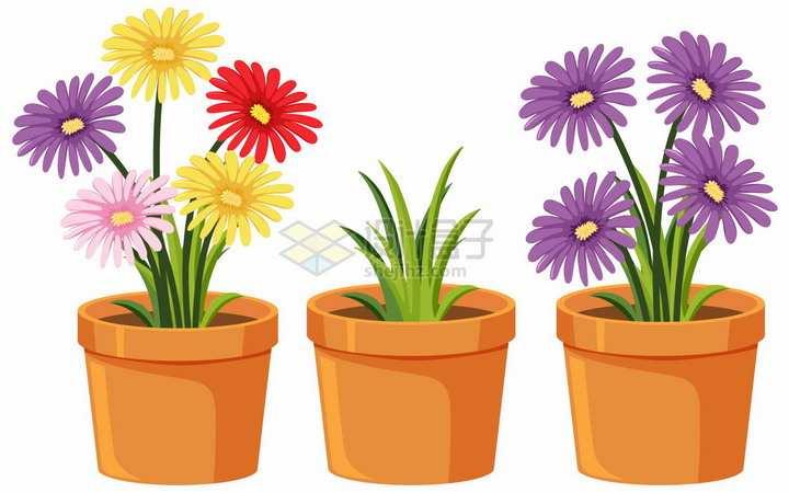 3款花盆中种植的太阳花菊花盆栽png图片素材