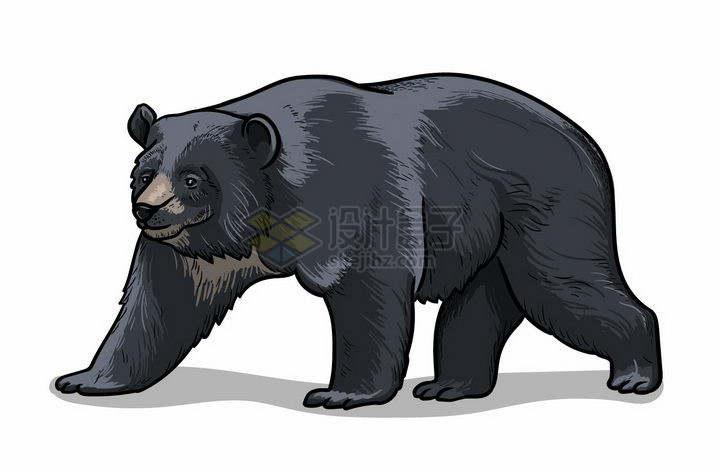 手绘风格黑熊野生动物png图片免抠矢量素材