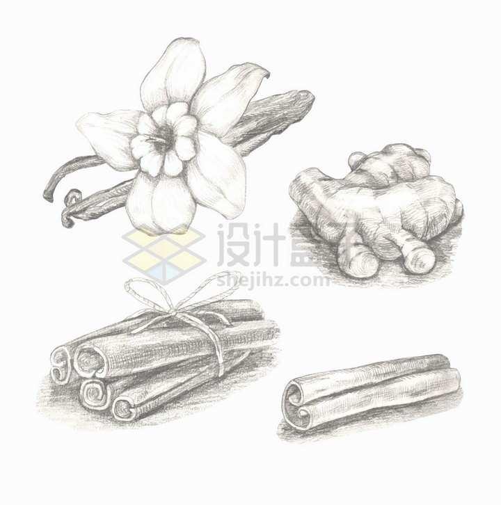 肉桂生姜香草等调味品手绘素描插画png图片免抠矢量素材