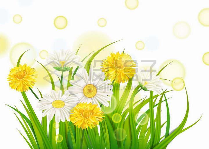 春天里盛开的鲜花和绿色的青草以及阳光光晕效果png图片免抠矢量素材