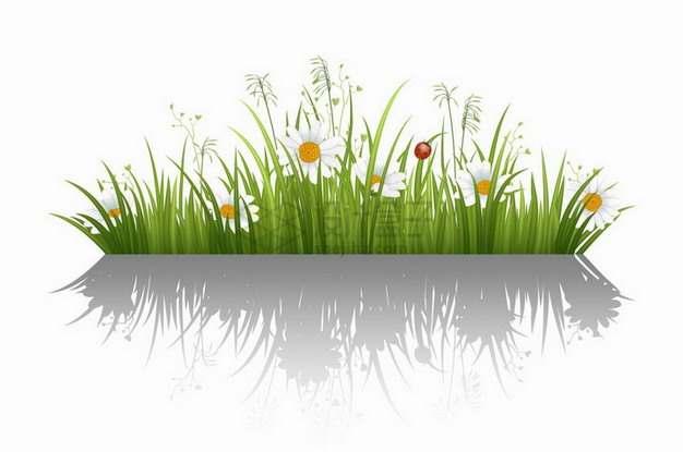 翠绿色草丛中的雏菊花和狗尾巴草装饰png图片免抠矢量素材