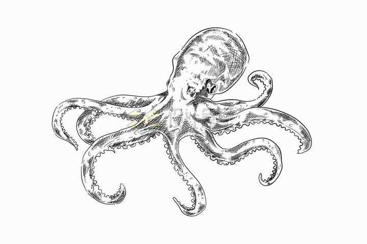 手绘素描风格大脑袋的章鱼插画png图片免抠矢量素材