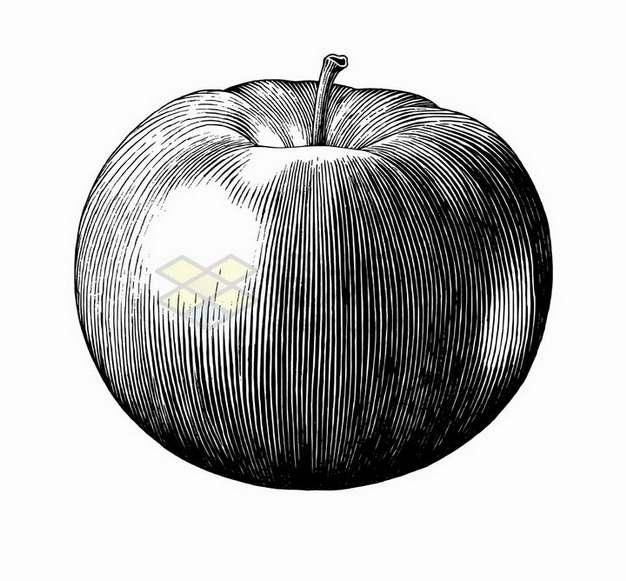 苹果美味水果黑色线条手绘素描插画png图片免抠矢量素材