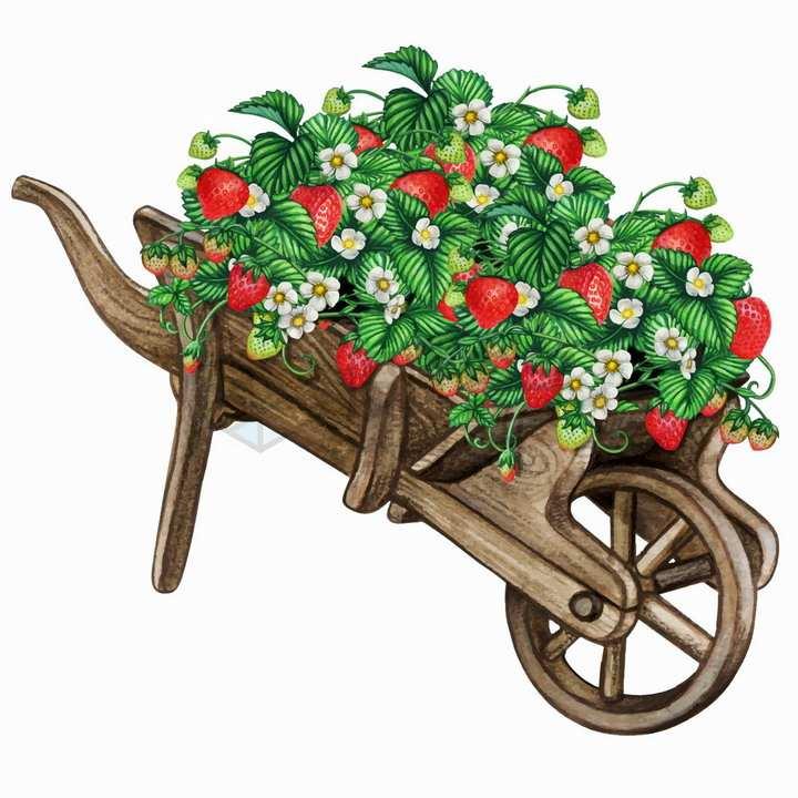 独轮车上的草莓和花朵水彩插画png图片免抠矢量素材