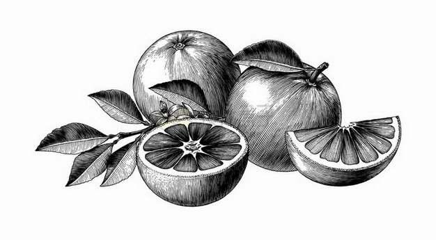 切开的橙子美味水果黑色线条手绘素描插画png图片免抠矢量素材