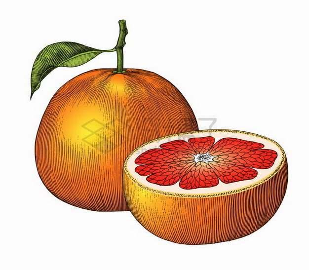 带叶子切开的橙子美味水果手绘素描插画png图片免抠矢量素材