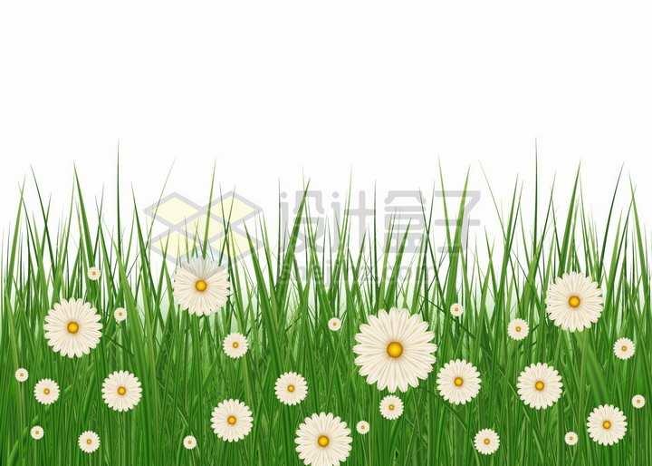 高高的青草丛中盛开的白色雏菊野花小花png图片免抠矢量素材