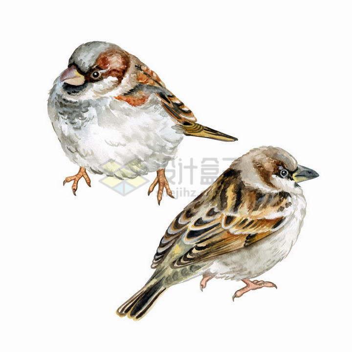 两款水彩画风格的麻雀小鸟儿png图片免抠矢量素材