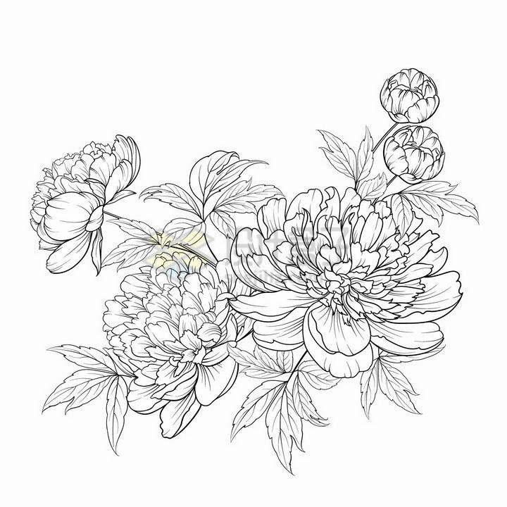 黑色线条手绘风格牡丹花图案png图片免抠矢量素材