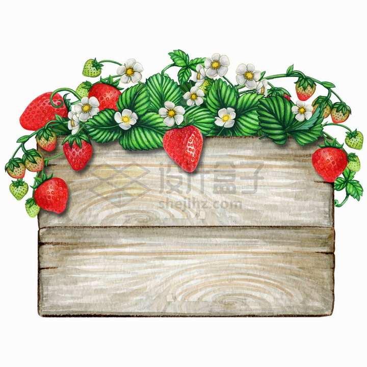 草莓藤蔓装饰的长方形木板标题框水彩插画png图片免抠矢量素材