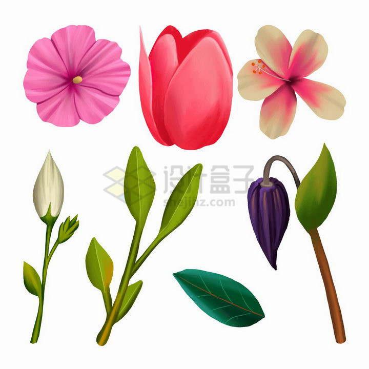 芍药花郁金香花等花卉和树叶png图片免抠矢量素材