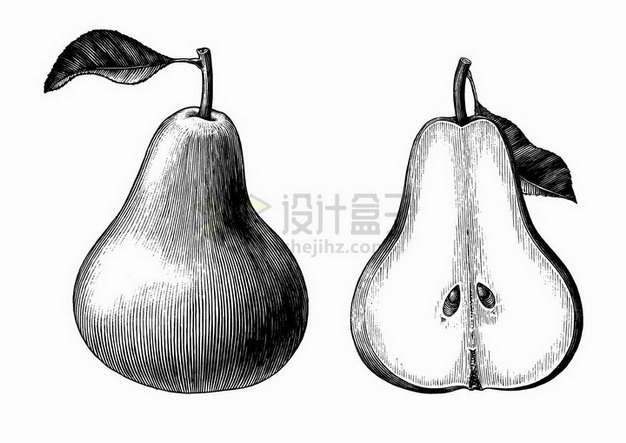 香梨美味水果黑色线条手绘素描插画png图片免抠矢量素材