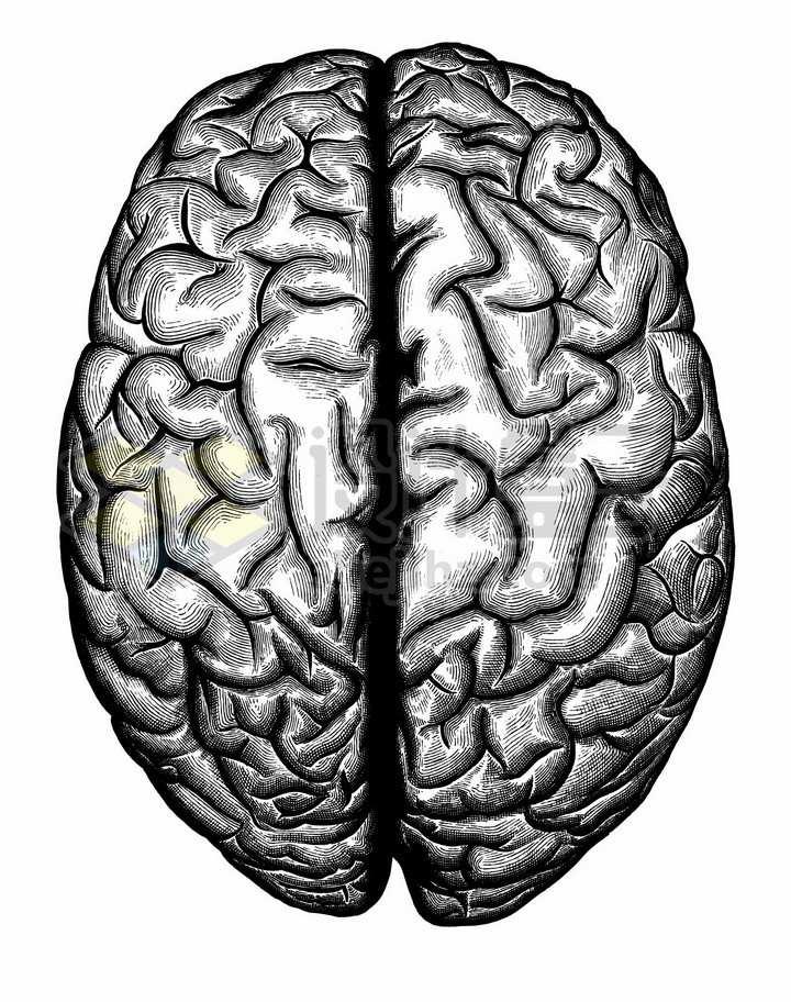 大脑人体组织结构图手绘素描插画png图片免抠矢量素材