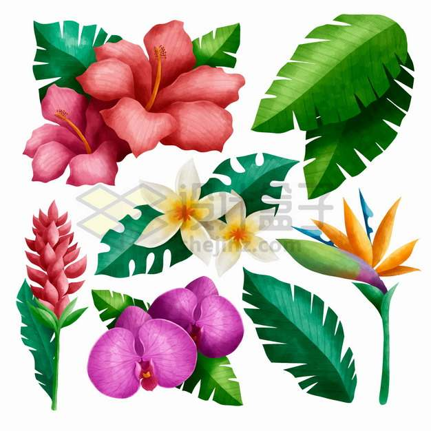 红色的扶桑花鸡蛋花鹤望兰蝎尾蕉蝴蝶兰芭蕉叶子等热带花朵花卉png图片素材