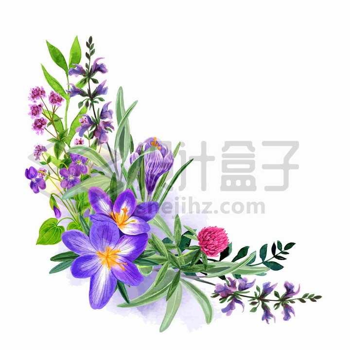 桔梗紫色野花鲜花花朵装饰彩绘插画png图片免抠矢量素材