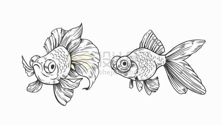 两条大眼睛金鱼手绘素描插画png图片免抠矢量素材