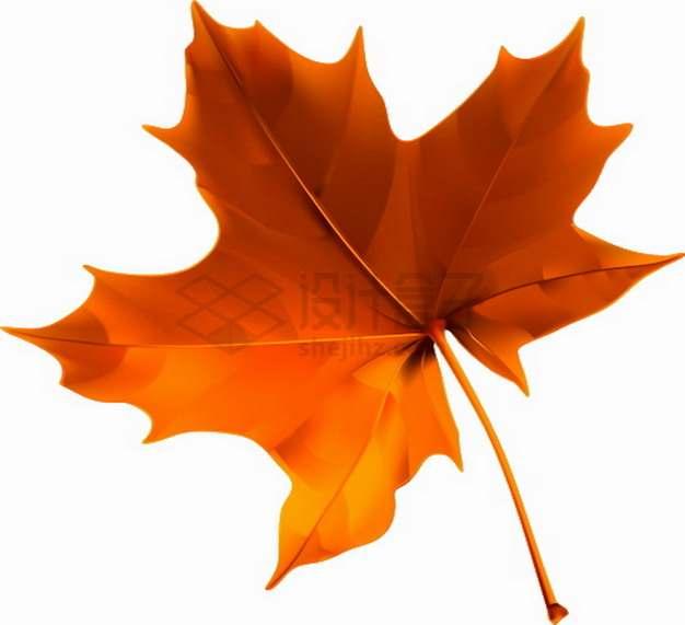 火红色的枫叶秋天树叶png图片素材