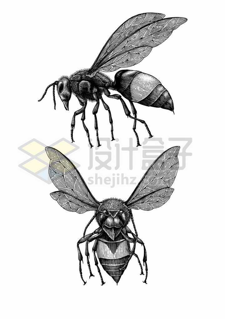 大黄蜂马蜂小昆虫手绘素描插画png图片免抠矢量素材