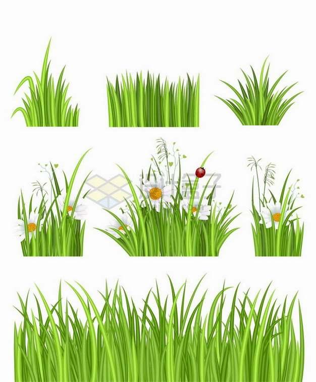 7款翠绿色草丛中盛开的雏菊花和瓢虫装饰png图片免抠矢量素材