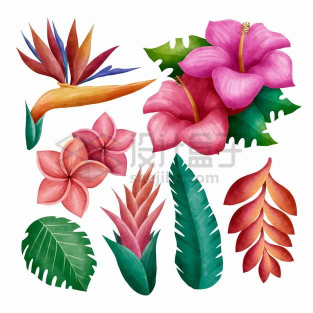 鹤望兰蝎尾蕉鸡蛋花扶桑花芭蕉叶子等热带花朵花卉png图片素材