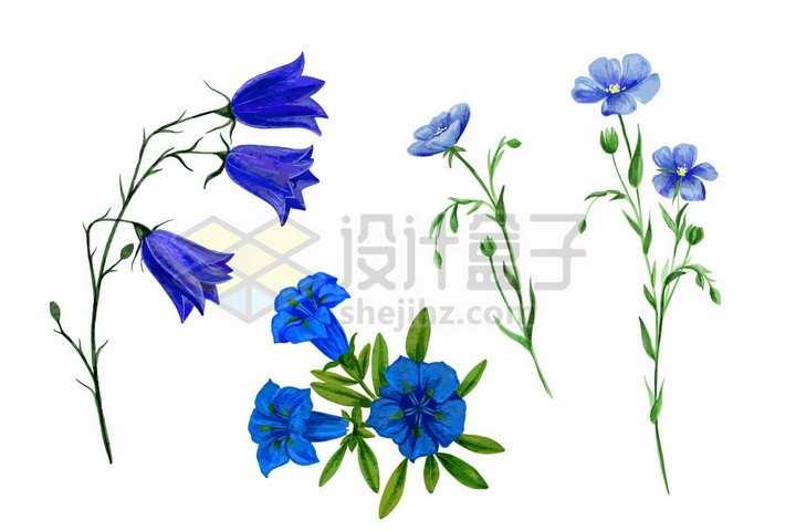桔梗喇叭花等紫色野花鲜花花朵装饰彩绘插画png图片免抠矢量素材