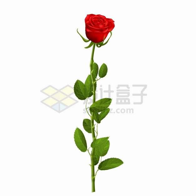 盛开的红色玫瑰花和花枝叶子png图片素材