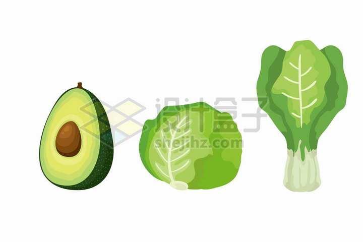牛油果包菜生菜等美味蔬菜插画png图片免抠矢量素材