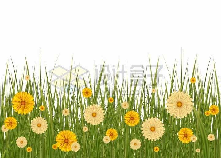 高高的青草丛中盛开的黄色雏菊野花小花png图片免抠矢量素材