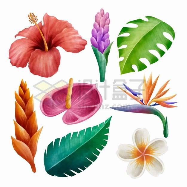 蝎尾蕉红掌花鸡蛋花扶桑花芭蕉叶子等热带花朵花卉png图片素材