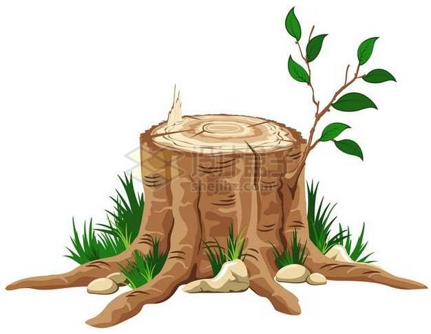 发芽的树桩png免抠图片素材