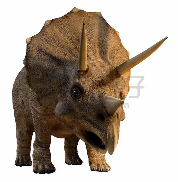 逼真的三角龙草食恐龙复原图png图片素材