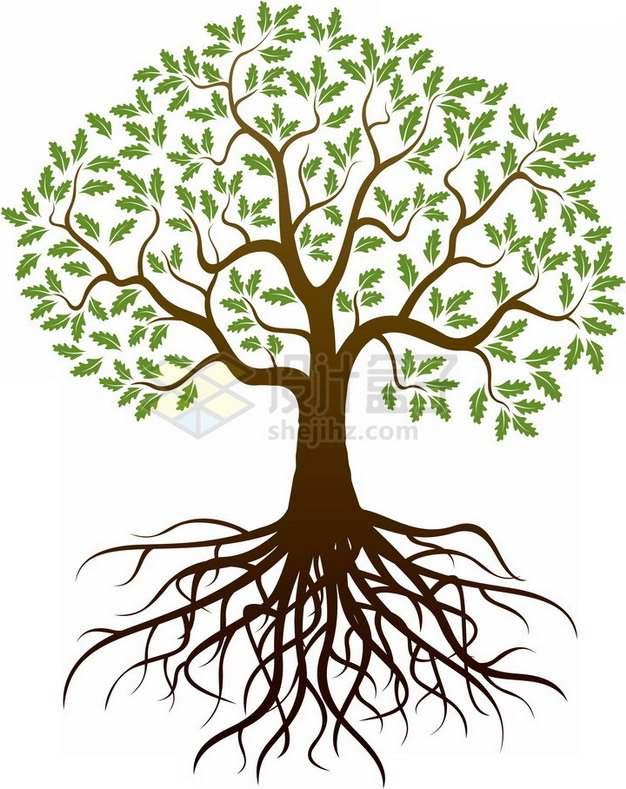 带树根的大树长满了绿色树叶png免抠图片素材