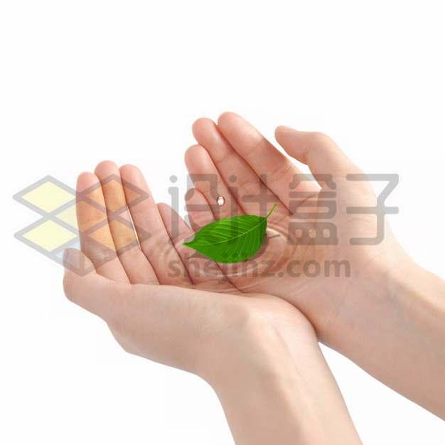双手捧起的透明水中飘着树叶绿叶png图片素材