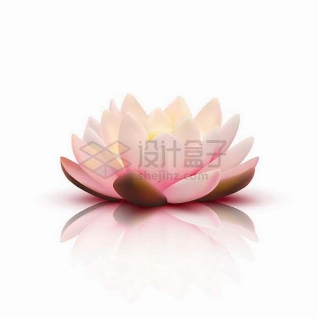 非常逼真的盛开的莲花鲜花花朵png图片素材