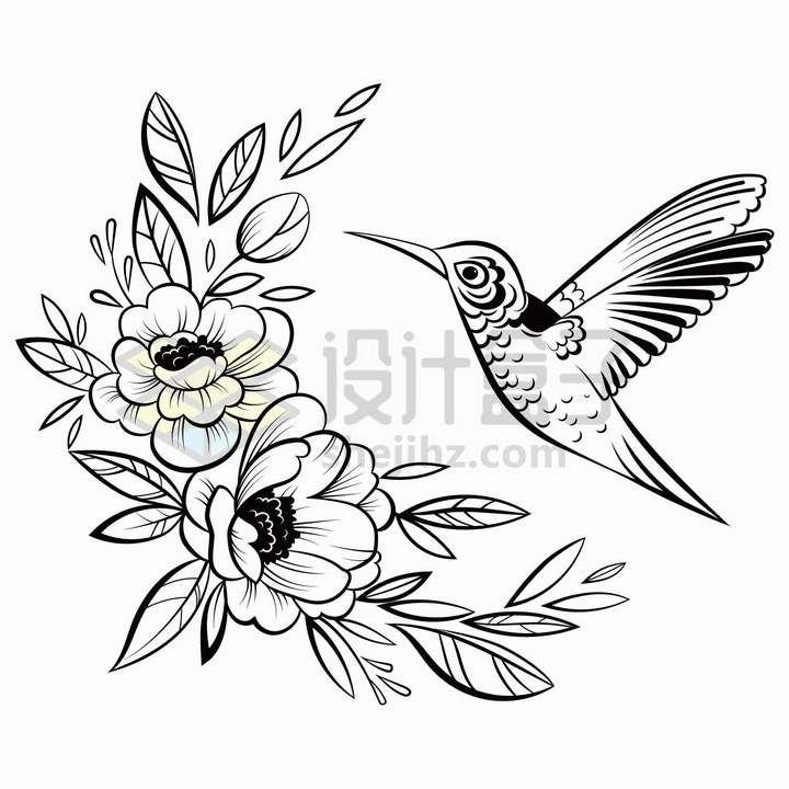 蜂鸟和花朵手绘线条素描插画png图片免抠矢量素材